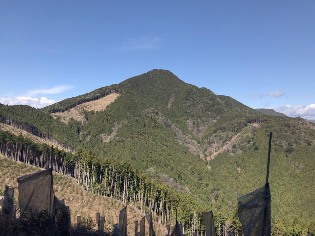 八高山の杉林